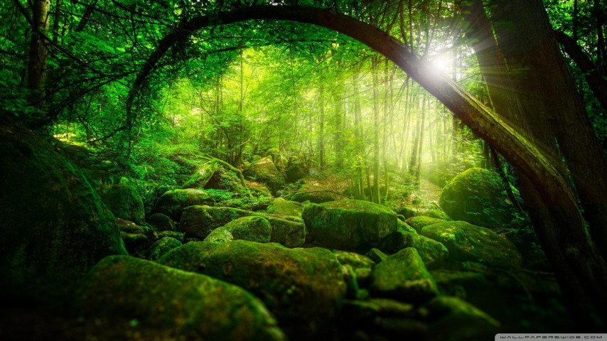 forest_76-wallpaper-1920x1080.jpg