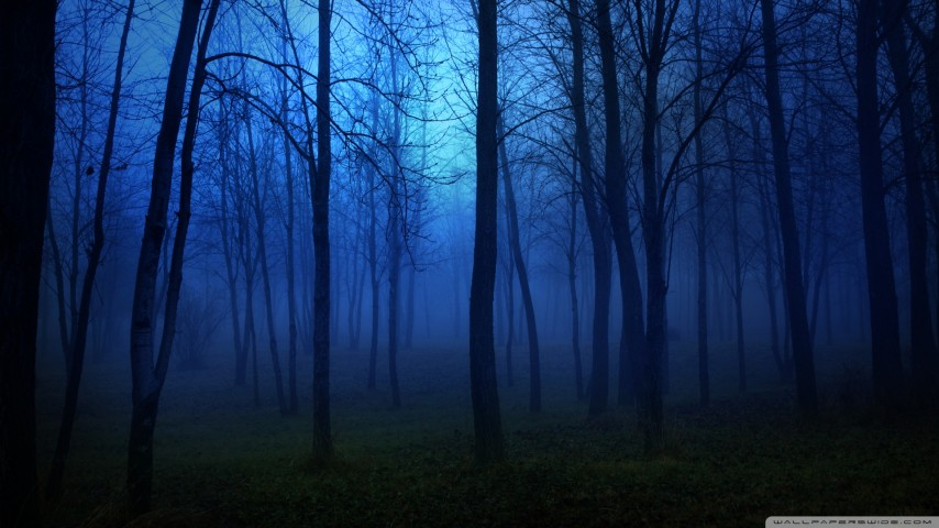 night_in_the_forest-wallpaper-1920x1080.jpg